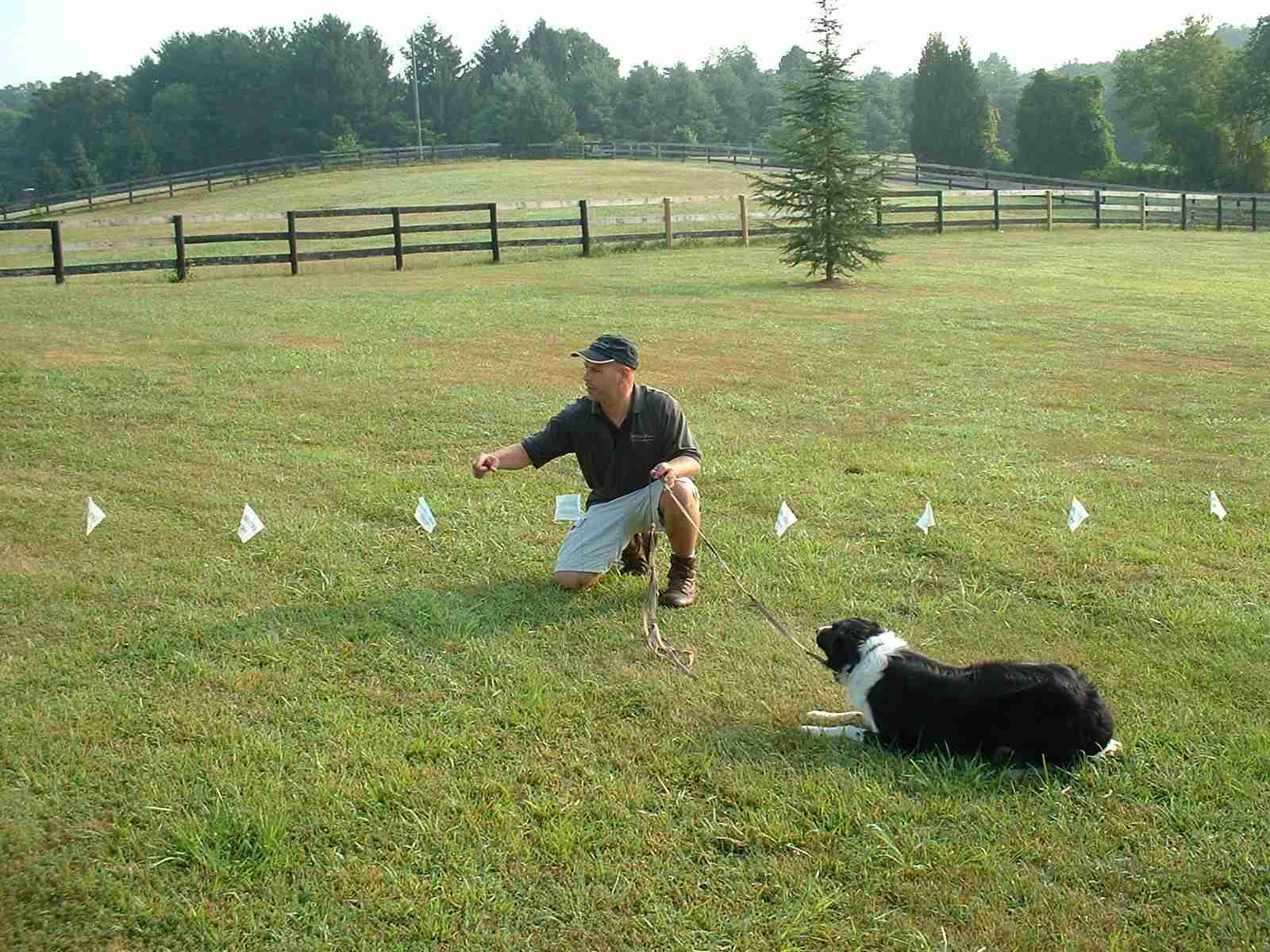 Gentle Pet Training